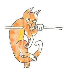 Orange Kitty!!