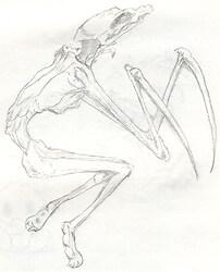 Bonetheif from Eternal Darkness