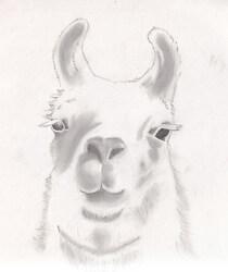 Llama Headshot