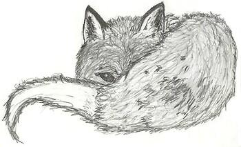 Peeking Fox