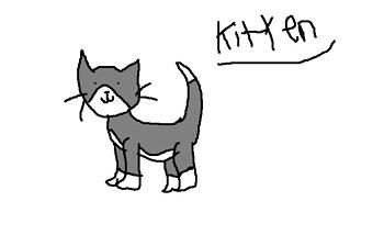 Kitten  XD