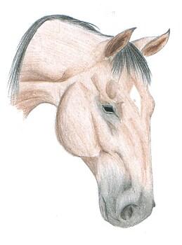 Bay Horse Head