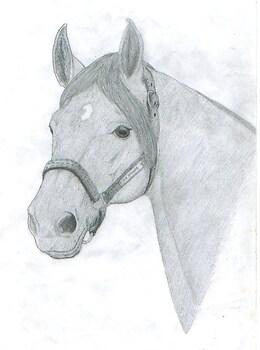 Horse Again