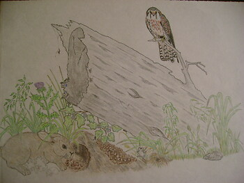 American Kestrel and Prey