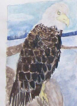 Bald Eagle in water color
