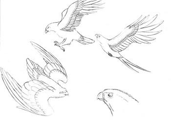 Hawk Doodles
