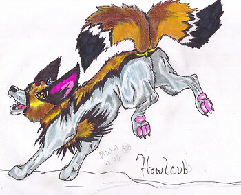 Howlcub *Pokemon contest*