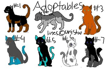 Cat adoption 4 **READ RULES**