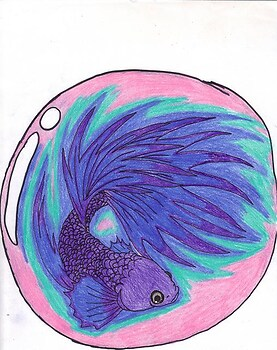 Betta(Future Tattoo) x3