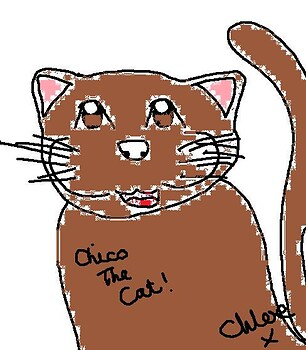 Chico the cat