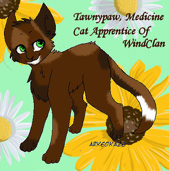 Tawnypaw, Medicine Cat Apprentice of WindClan