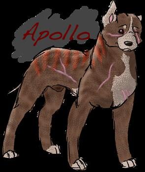 Apollo.