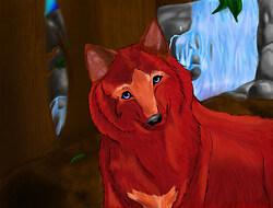 Sasha the Red Wolf