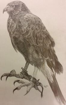 Hunter's Hawk