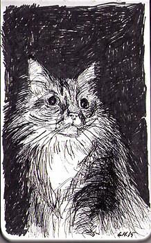 Dramatic cat named Dezi