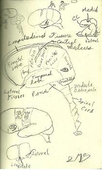 Neuroscience Notes